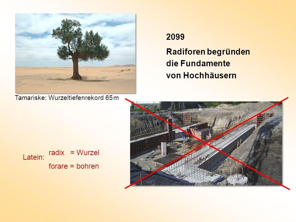 2099 Radiforen begründen die Fundamente von Hochhäusern radix = Wurzel
