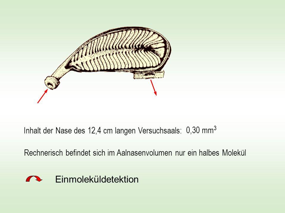 Einmoleküldetektion Inhalt der Nase des 12,4 cm langen Versuchsaals: