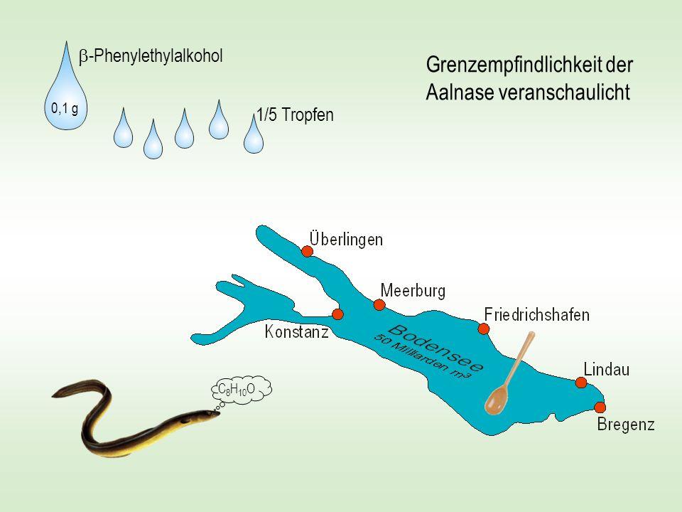 Grenzempfindlichkeit der Aalnase veranschaulicht