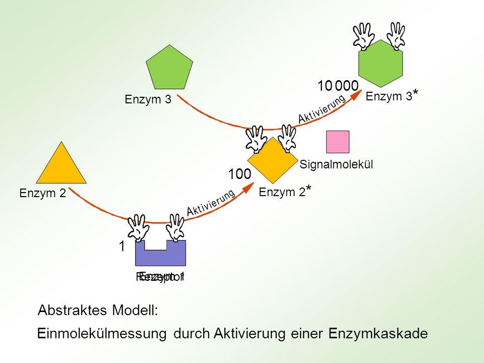 Einmolekülmessung durch Aktivierung einer Enzymkaskade