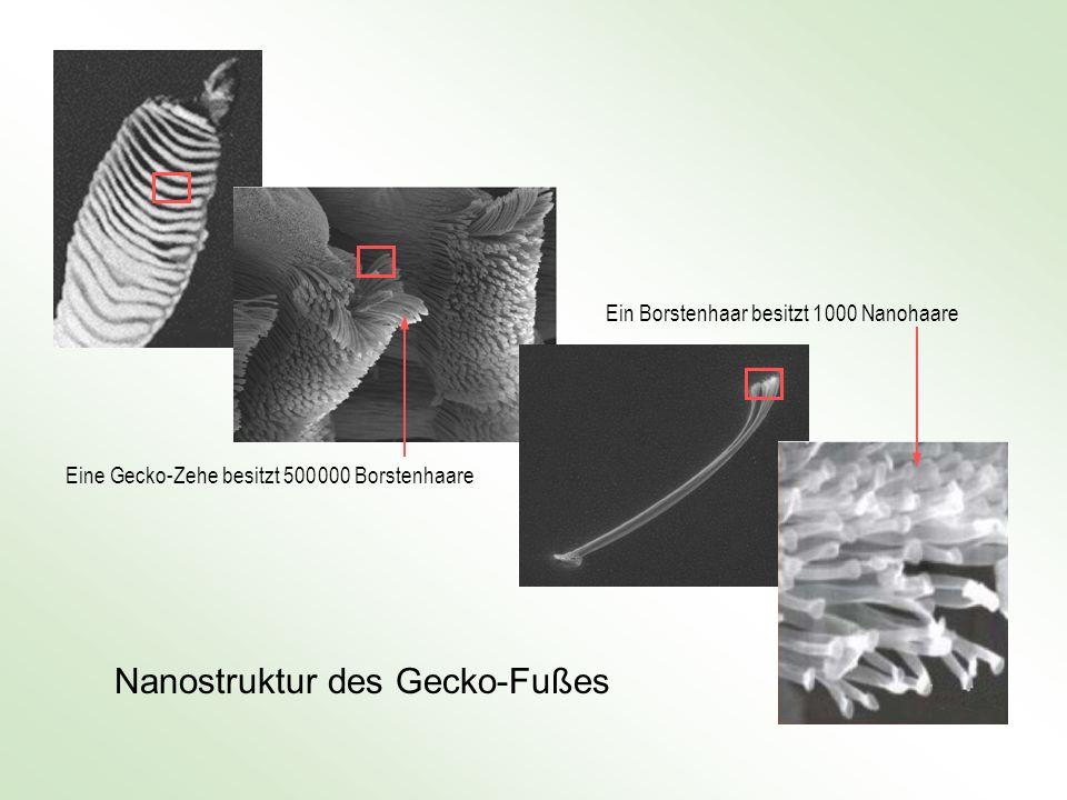 Nanostruktur des Gecko-Fußes
