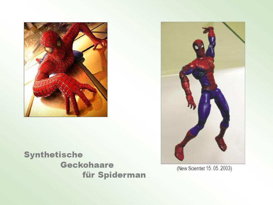 Synthetische Geckohaare für Spiderman (New Scientist 15. 05. 2003)