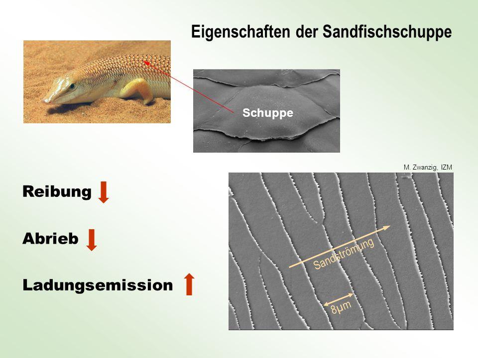 Eigenschaften der Sandfischschuppe