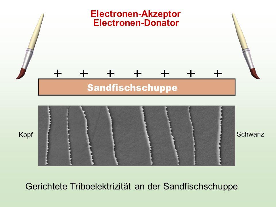 Gerichtete Triboelektrizität an der Sandfischschuppe