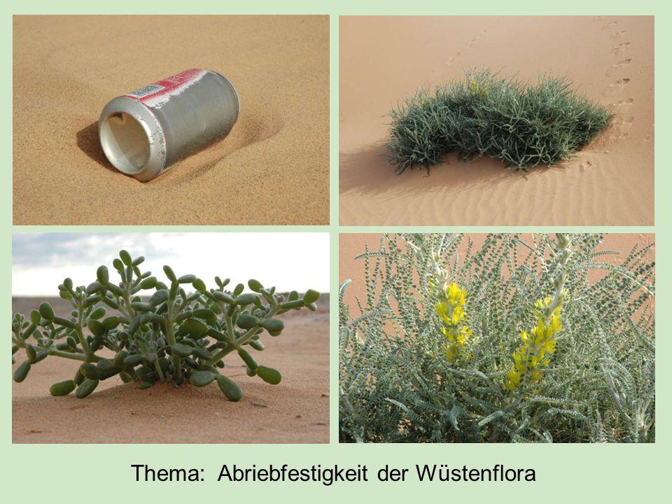 Thema: Abriebfestigkeit der Wüstenflora