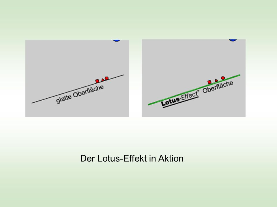 Der Lotus-Effekt in Aktion