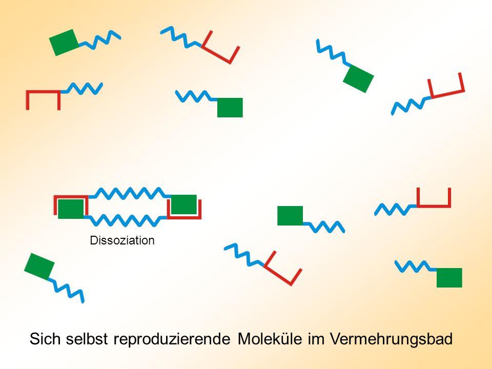 Sich selbst reproduzierende Moleküle im Vermehrungsbad
