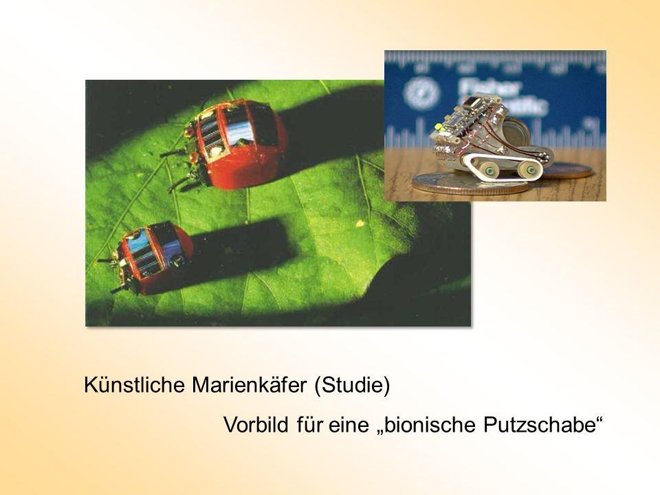 Künstliche Marienkäfer (Studie)
