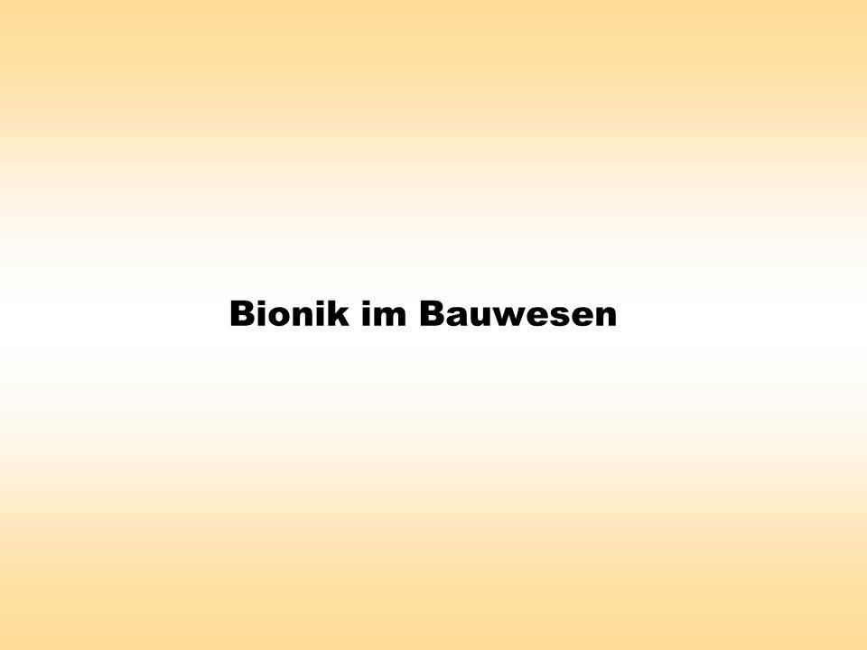 Bionik im Bauwesen