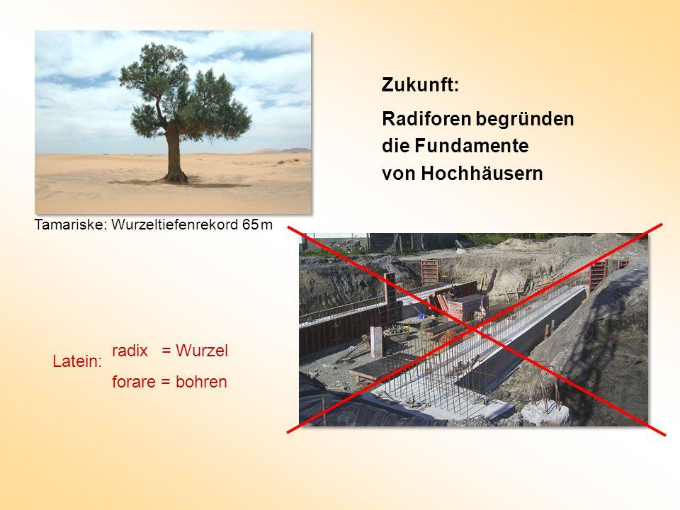 Zukunft: Radiforen begründen die Fundamente von Hochhäusern