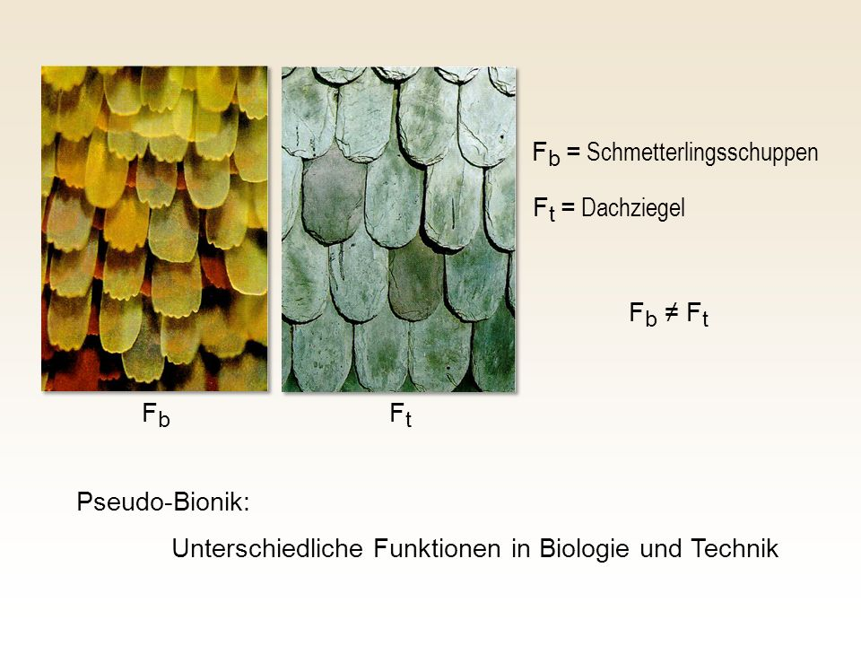 Fb = Schmetterlingsschuppen