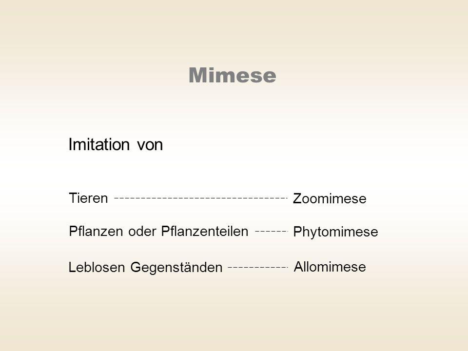 Mimese Imitation von Tieren Zoomimese Pflanzen oder Pflanzenteilen