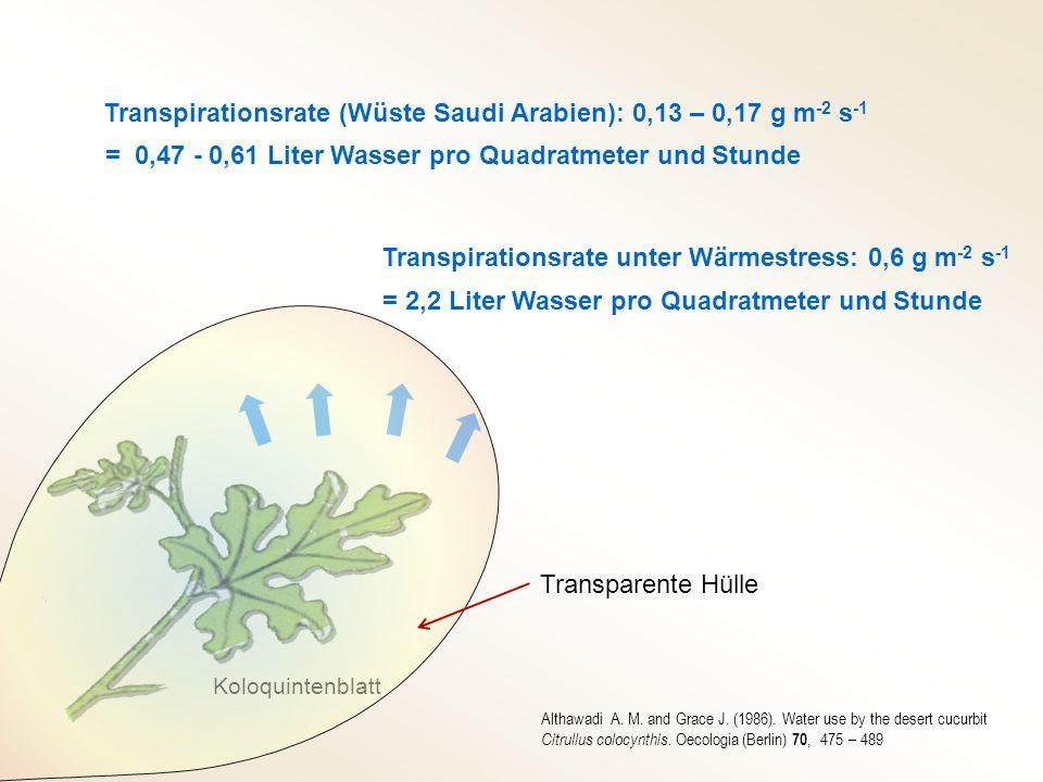 Transpirationsrate (Wüste Saudi Arabien): 0,13 – 0,17 g m-2 s-1