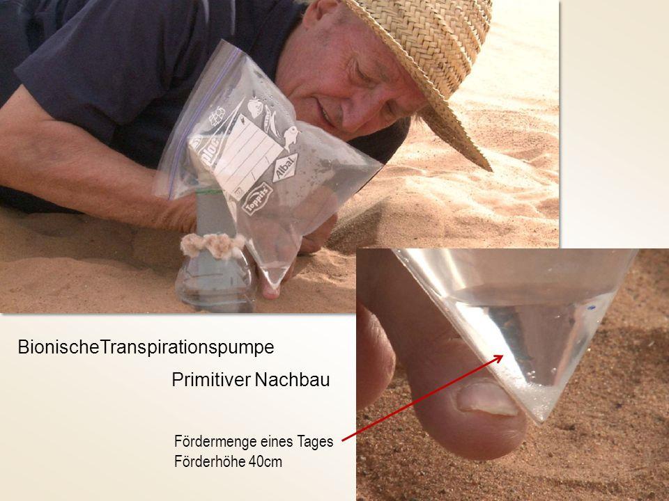 BionischeTranspirationspumpe Primitiver Nachbau