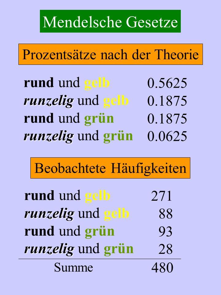 Mendelsche Gesetze Prozentsätze nach der Theorie rund und gelb 0.5625