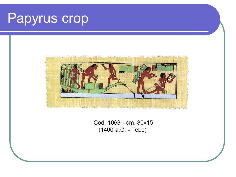 Papyrus crop.