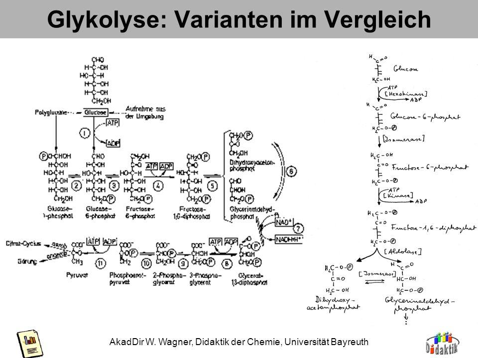 Glykolyse: Varianten im Vergleich