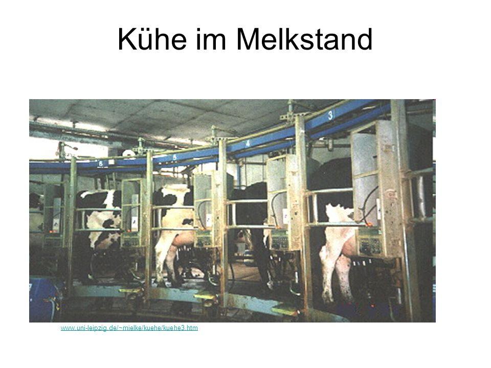 Kühe im Melkstand www.uni-leipzig.de/~mielke/kuehe/kuehe3.htm