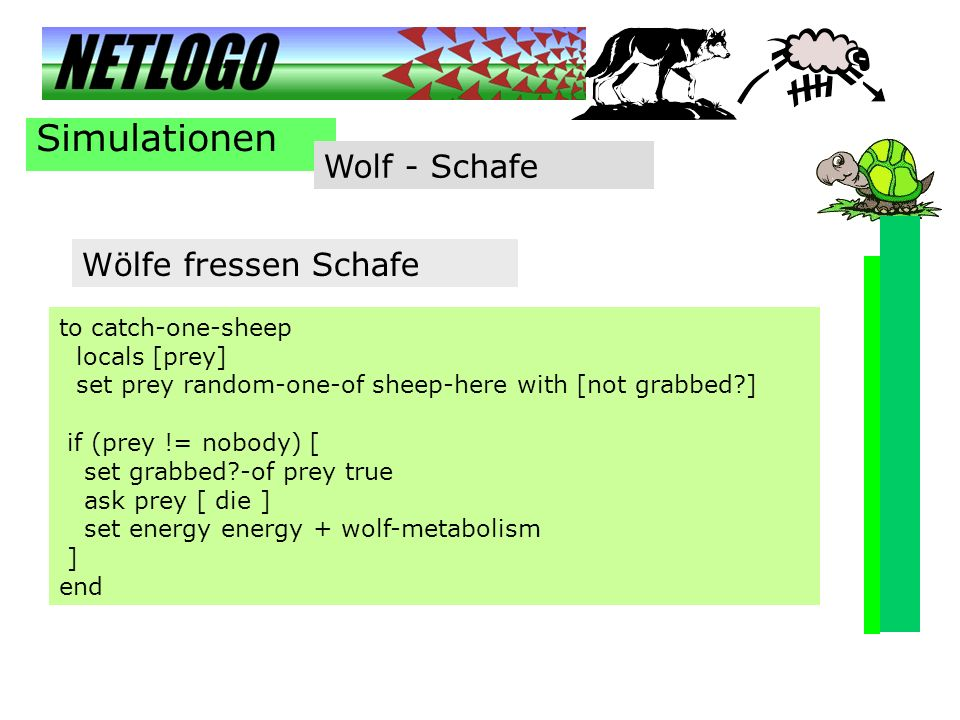 Simulationen Wolf - Schafe Wölfe fressen Schafe to catch-one-sheep