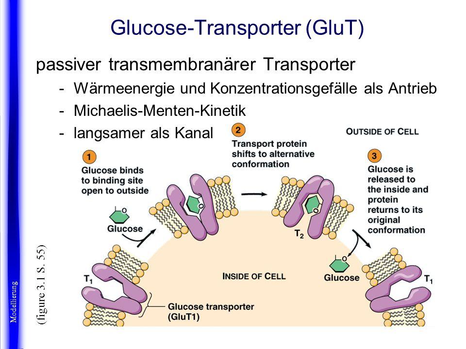 Glucose-Transporter (GluT)