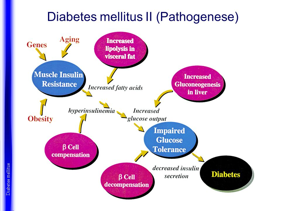 Diabetes mellitus II (Pathogenese)