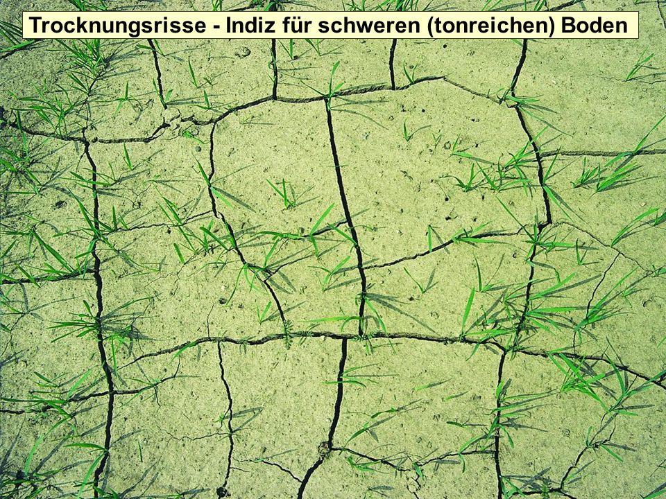 Trocknungsrisse - Indiz für schweren (tonreichen) Boden