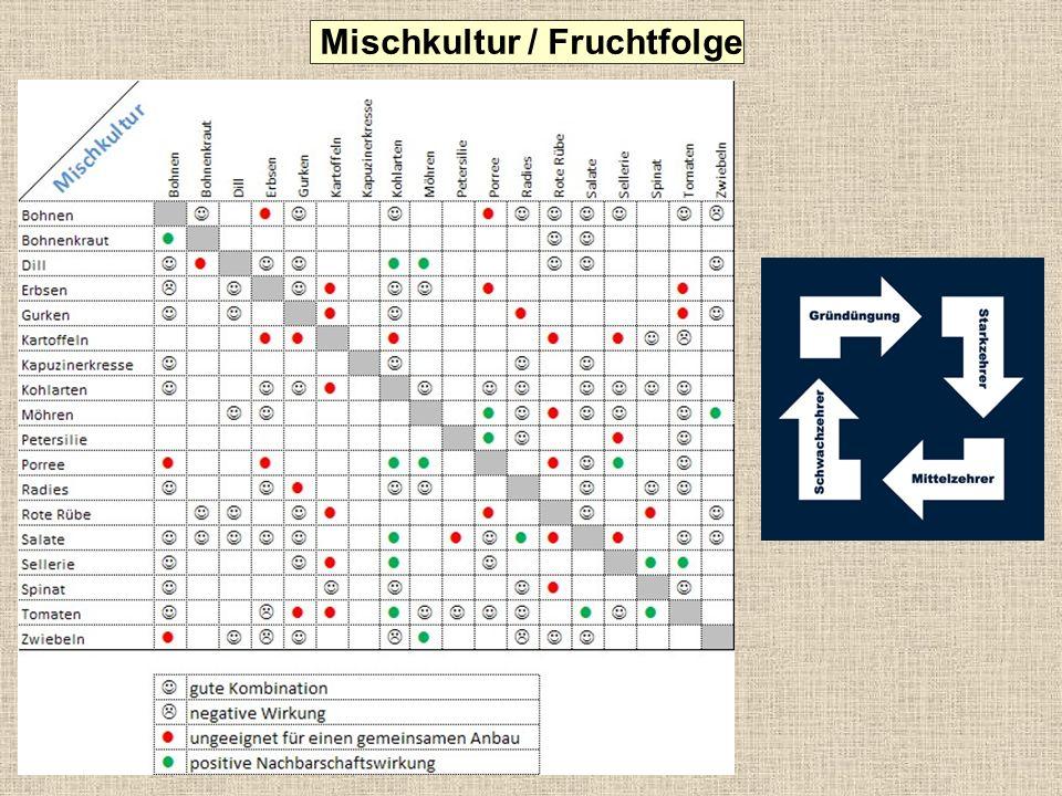 Mischkultur / Fruchtfolge