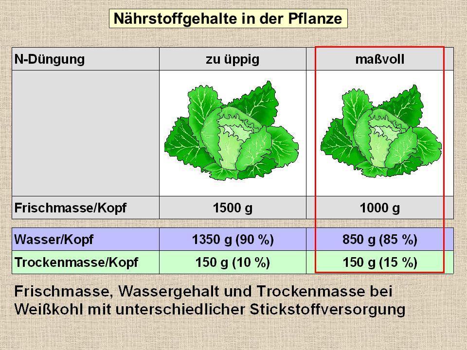 Nährstoffgehalte in der Pflanze