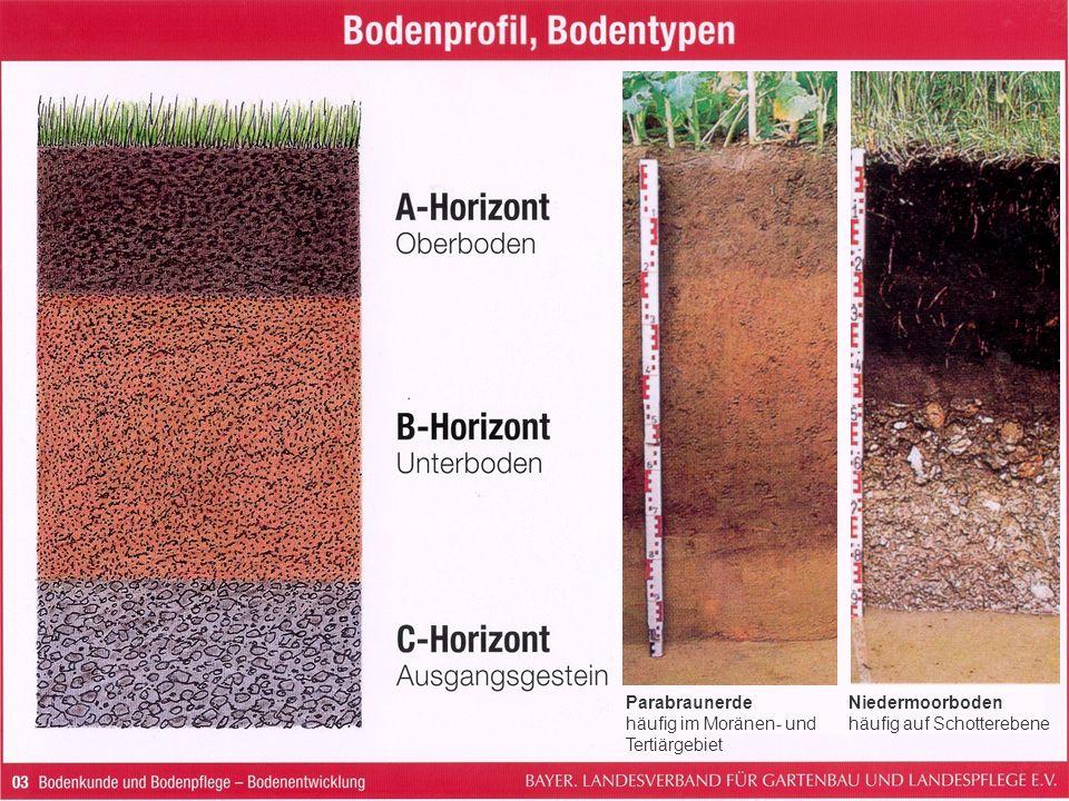 Parabraunerde häufig im Moränen- und Tertiärgebiet Niedermoorboden häufig auf Schotterebene