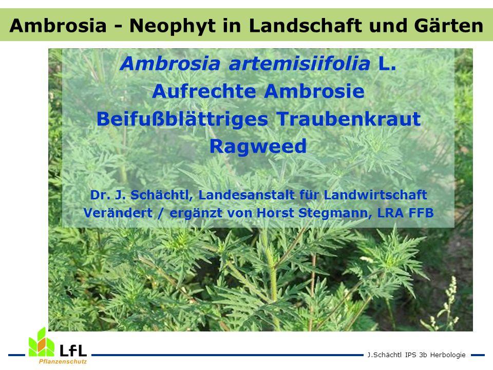 Ambrosia artemisiifolia L. Aufrechte Ambrosie