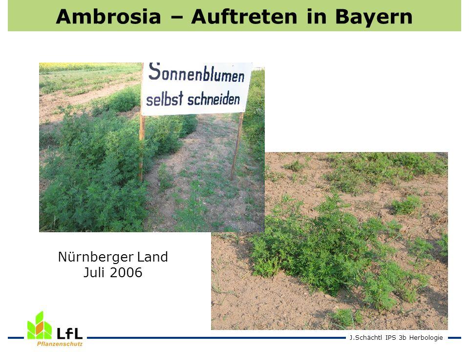 Ambrosia – Auftreten in Bayern