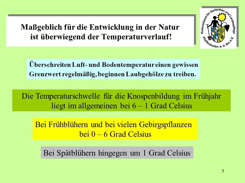 Die Temperaturschwelle für die Knospenbildung im Frühjahr