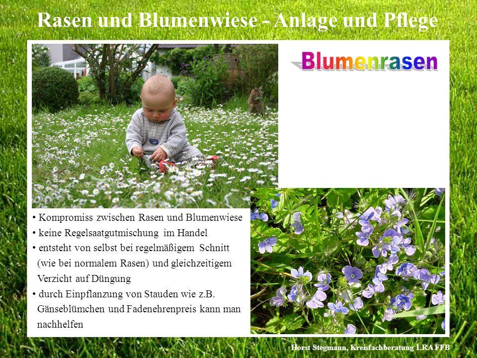 Blumenrasen Kompromiss zwischen Rasen und Blumenwiese