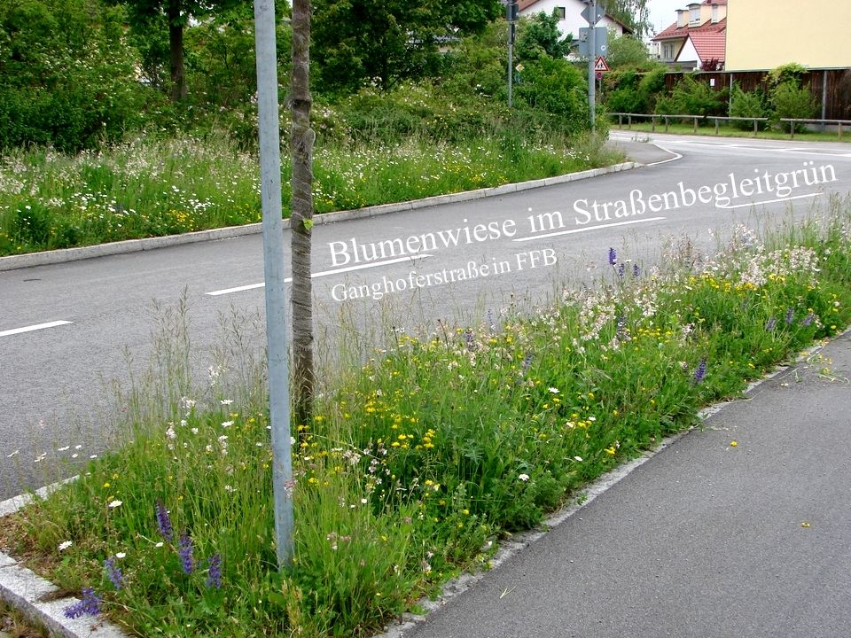 Verkehrsbegleitgrün - Blumenwiese
