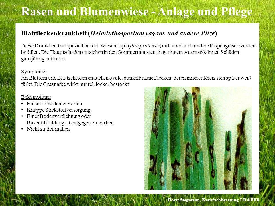 Blattfleckenkrankheit (Helminthosporium vagans und andere Pilze)