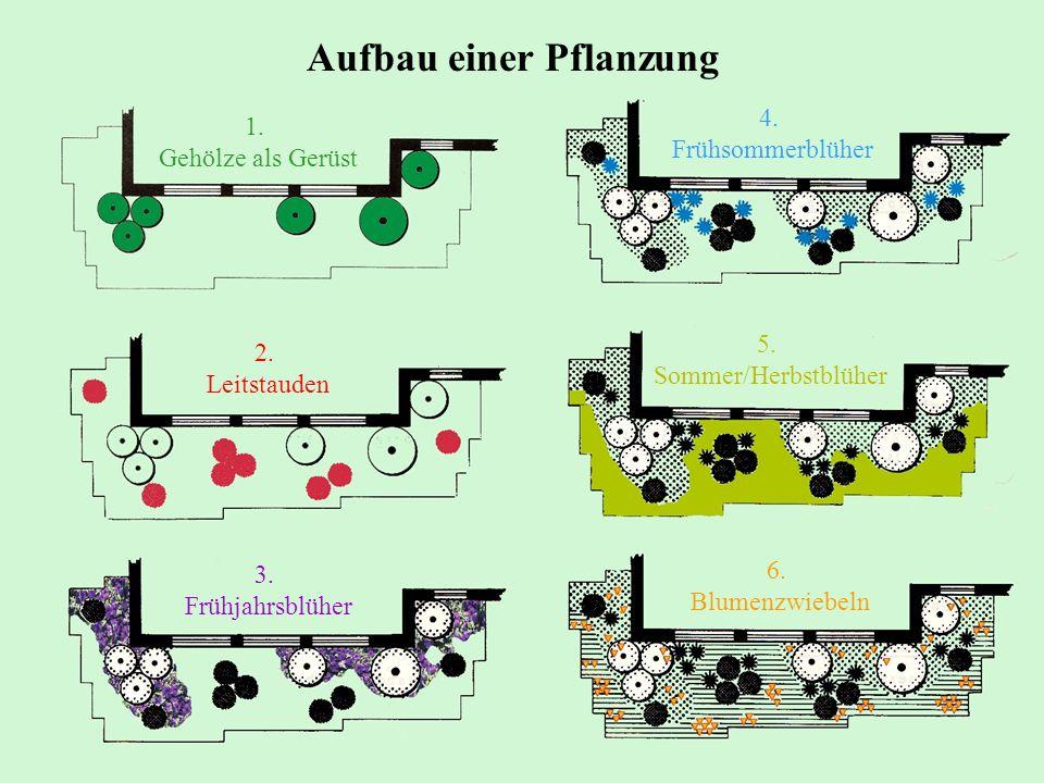 Aufbau einer Pflanzung