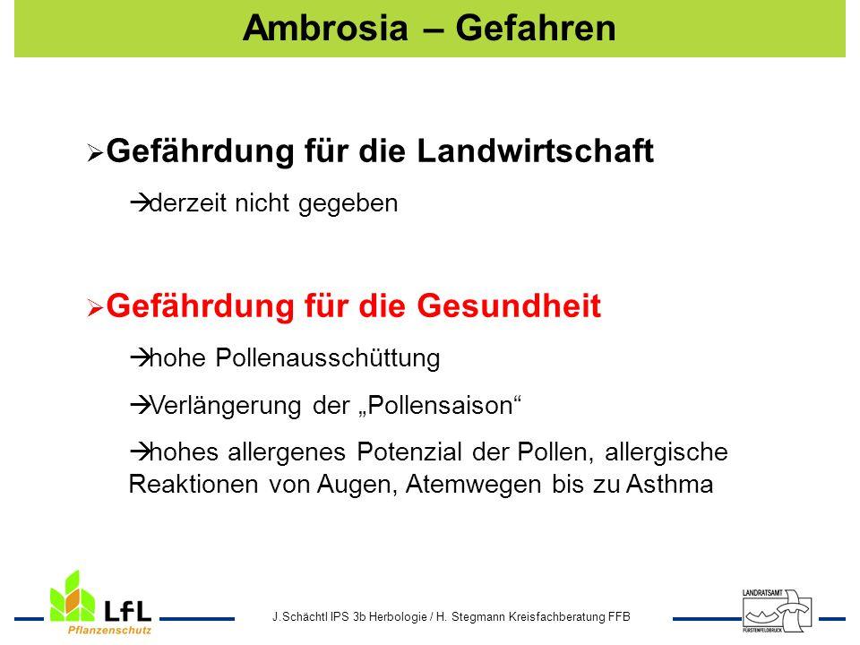 Ambrosia – Gefahren Gefährdung für die Landwirtschaft