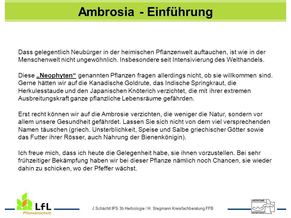 Ambrosia - Einführung