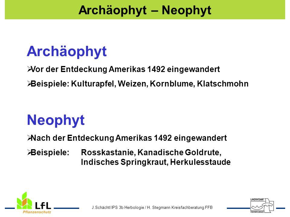 Ambrosia - Archäophyt - Neophyt