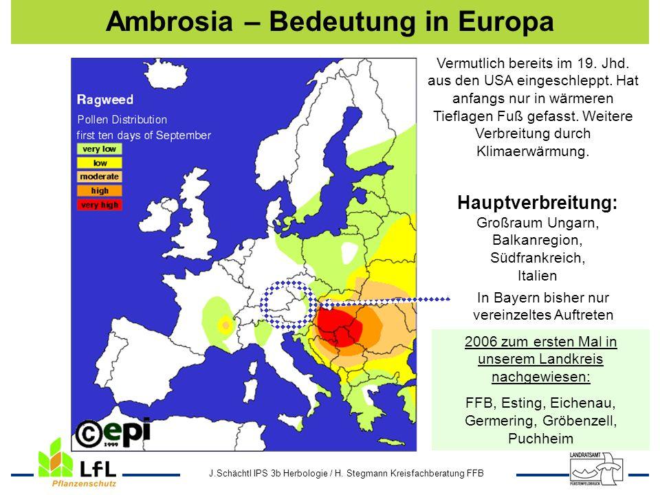 Ambrosia – Bedeutung in Europa
