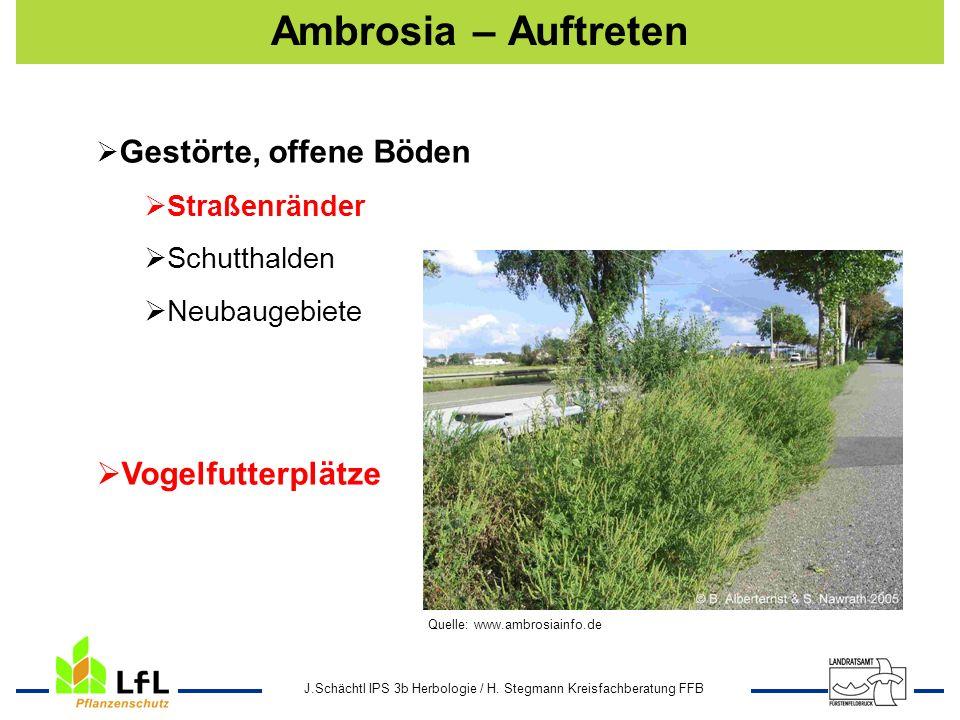 Ambrosia – Auftreten Vogelfutterplätze Gestörte, offene Böden