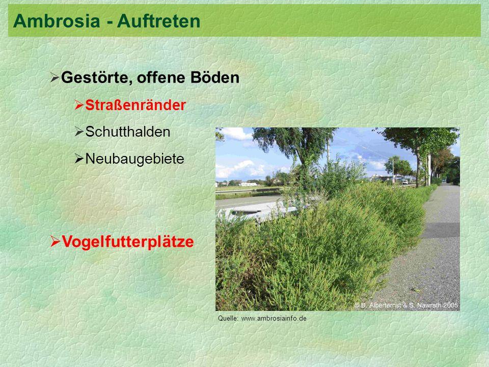 Ambrosia - Auftreten Vogelfutterplätze Gestörte, offene Böden