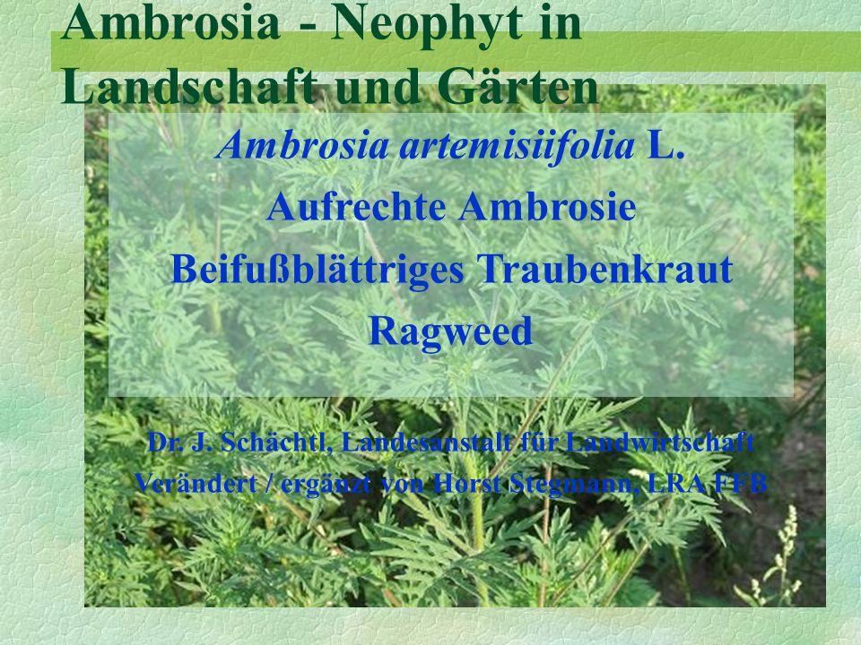 Ambrosia - Neophyt in Landschaft und Gärten