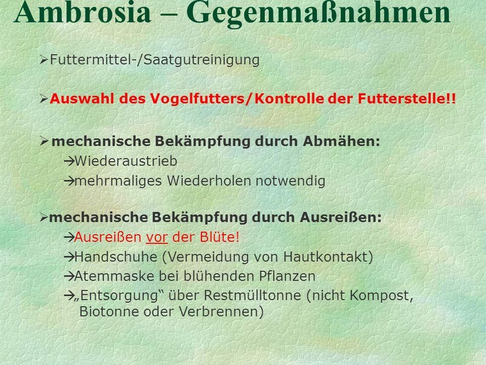 Ambrosia – Gegenmaßnahmen