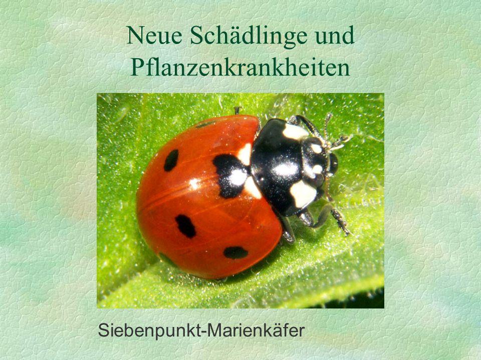 Neue Schädlinge und Pflanzenkrankheiten