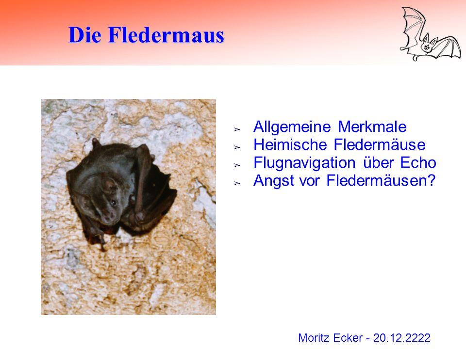 Die Fledermaus Allgemeine Merkmale Heimische Fledermäuse