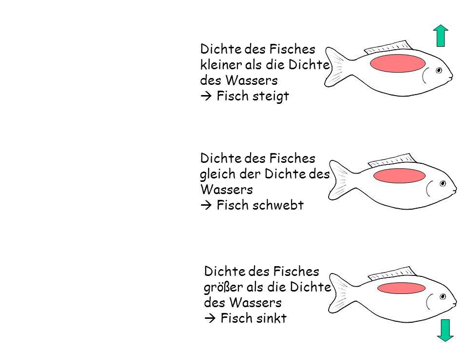 Dichte des Fisches kleiner als die Dichte des Wassers