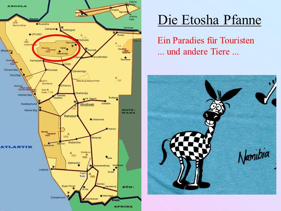 Die Etosha Pfanne Ein Paradies für Touristen ... und andere Tiere ...