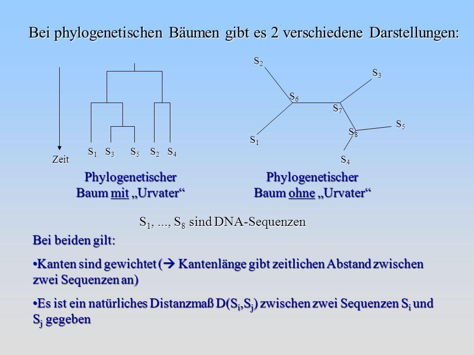 Bei phylogenetischen Bäumen gibt es 2 verschiedene Darstellungen: