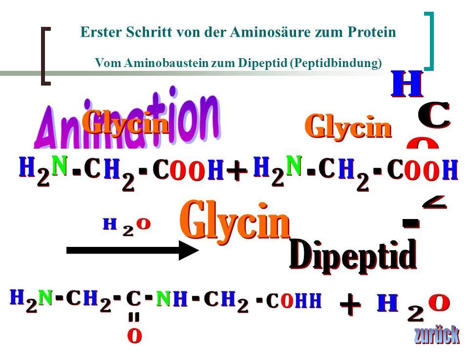 H H H Animation C C Glycin Glycin O O + N 2 2 Glycin - - Dipeptid +